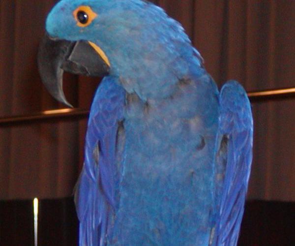 Adoptable Birds